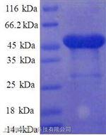 融合蛋白(FUS)单克隆抗体