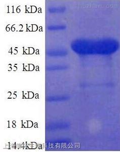 三叶因子3(TFF3)单克隆抗体