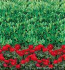 绿化印花防寒布价格