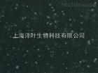 ZY-H151人子宫肌瘤组织源细胞