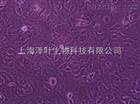 ZY-H169人血管周细胞