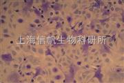 甲苯胺蓝染色实验代测
