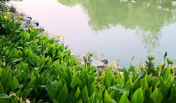 """""""白洋淀与大清河流域(雄安新区)水生态环境整治与水安全保障关键技术研究与示范""""取得突破进展"""