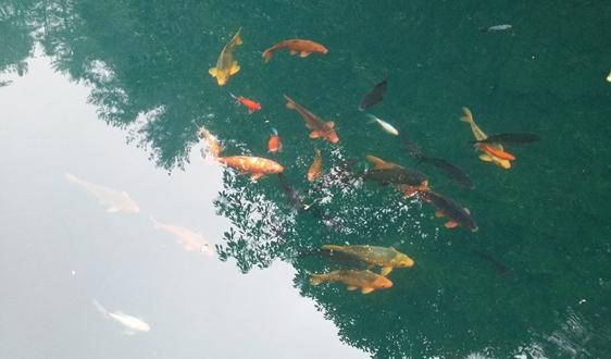 总投资46.58亿,六安城区水环境一体化综合治理项目启动