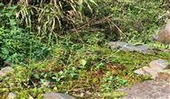 原创|关于污泥干化技术的总结!