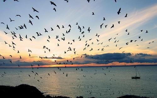 加快推进生态文明建设 七大工程护航生物多样性