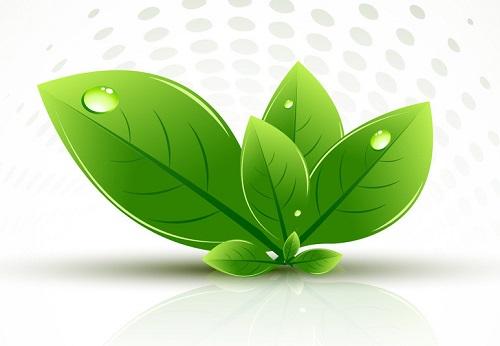 背景 壁纸 绿色 绿叶 树叶 植物 桌面 500_346