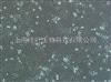 ZY-R022大鼠甲状腺上皮细胞