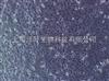 ZY-R021大鼠胰腺上皮细胞