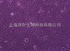 ZY-H090人血管内皮细胞